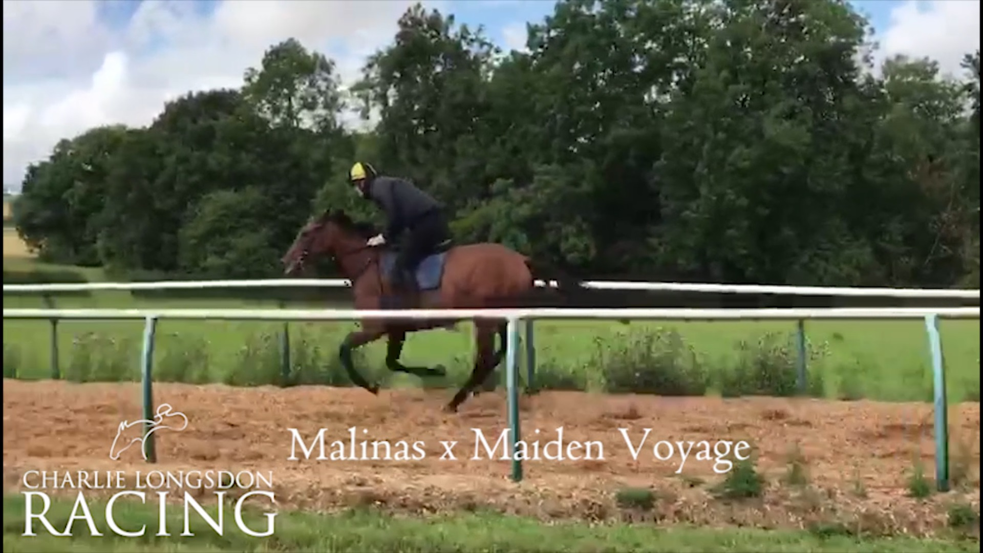 Malinas 3 year old filly available For Sale