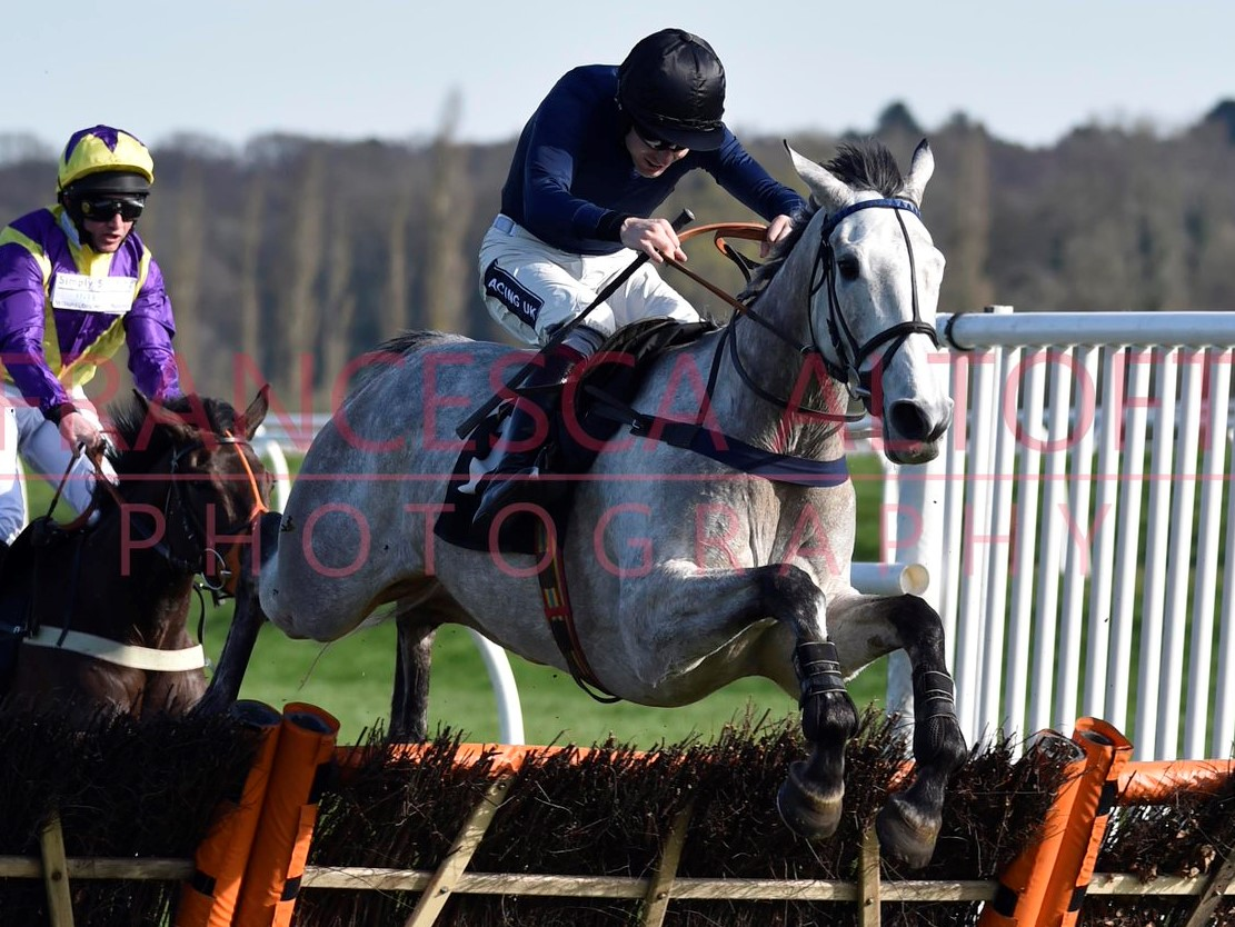 Snow Leopardess and Aiden Coleman jumping the last at Newbury, Photo by Francesca Altoft