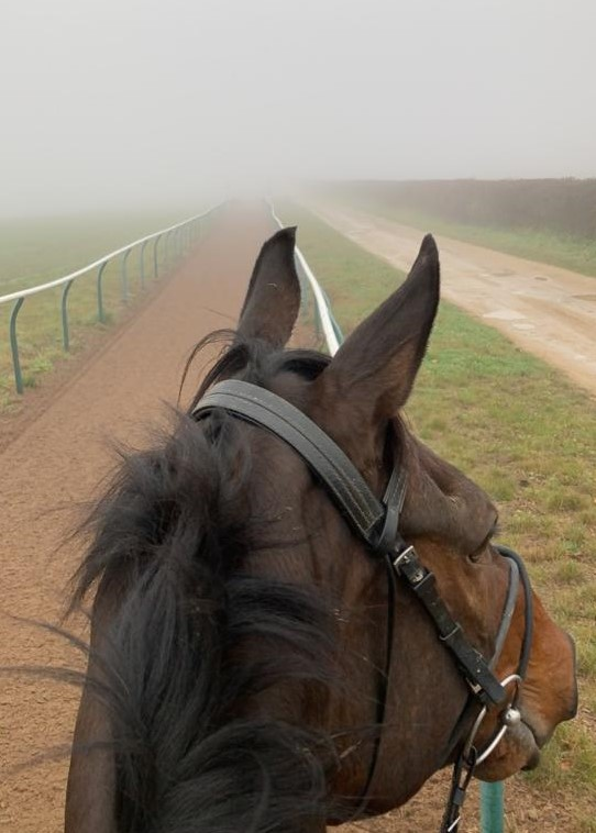 Illegal Model trying to look through the fog this morning!