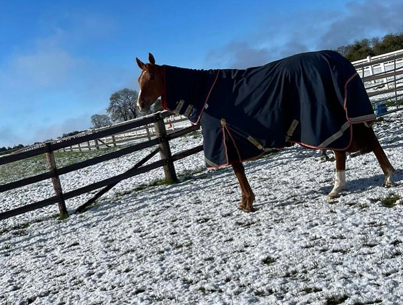 Local Affair in the surprise snow yesterday morning